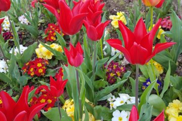 jardins-fleuris-2