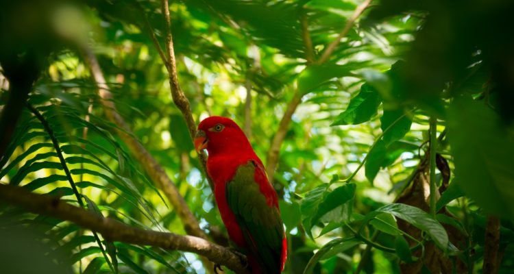 Exotic parrot in jungle