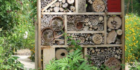 maison-insecte
