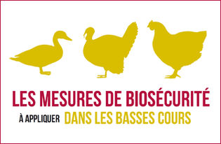 lnfluenza-aviaire-H5N8-Un-foyer-confirme-dans-une-basse-cour-dans-le-departement-du-Nord_large